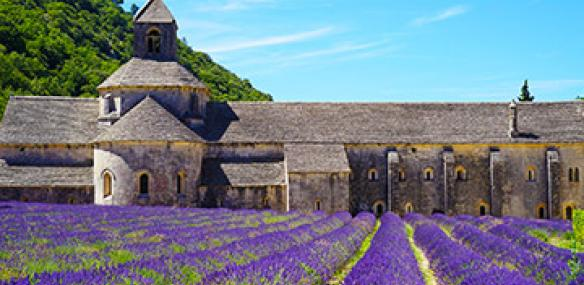 lavender fields in south of france